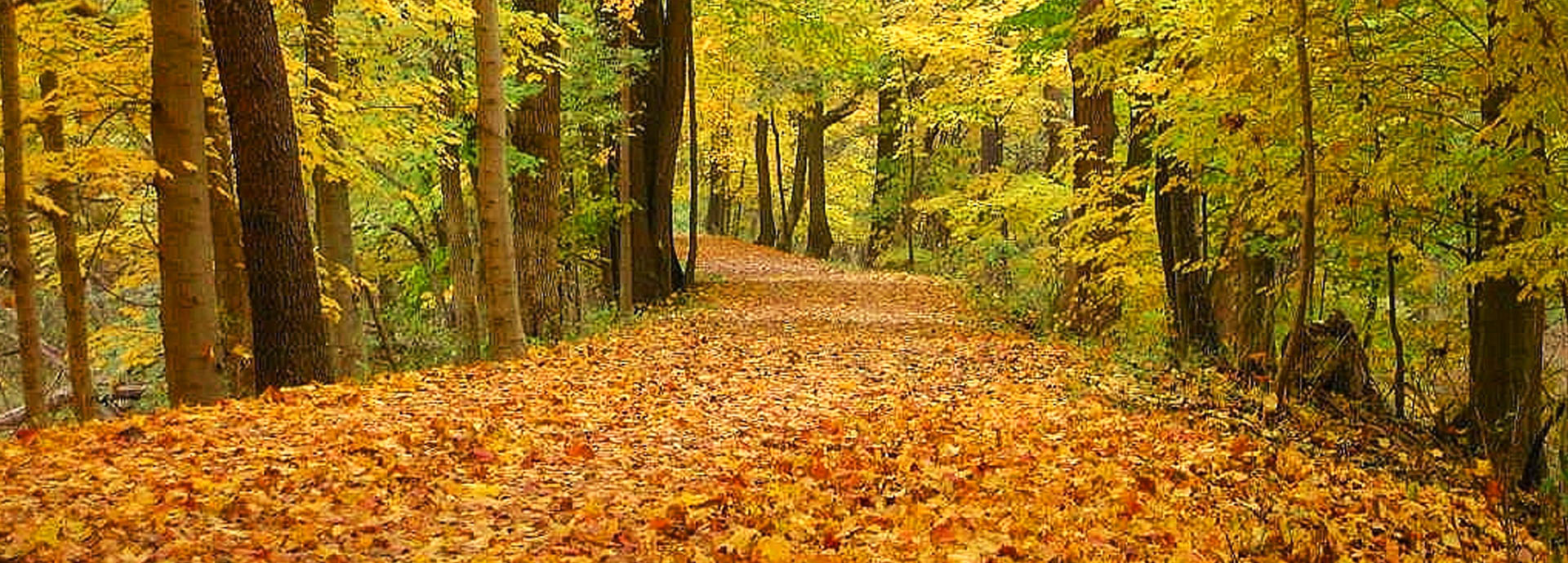 Medina County Fall Foliage Tour